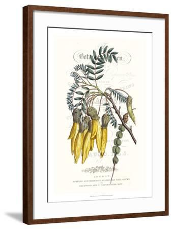 Flower Garden Varietals III-Vision Studio-Framed Giclee Print