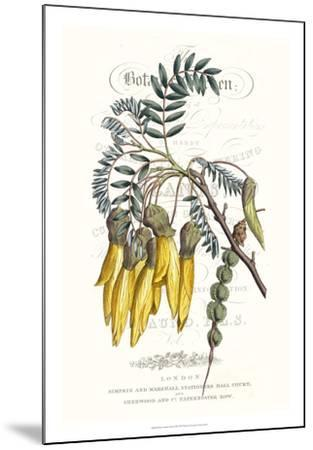 Flower Garden Varietals III-Vision Studio-Mounted Giclee Print