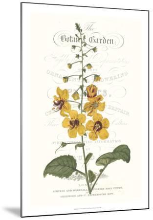 Flower Garden Varietals V-Vision Studio-Mounted Giclee Print