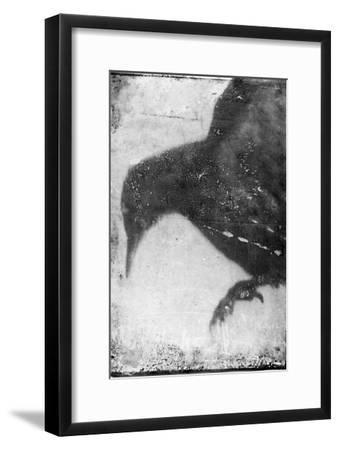 B&W Flight I-Ingrid Blixt-Framed Art Print