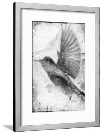 B&W Flight II-Ingrid Blixt-Framed Art Print