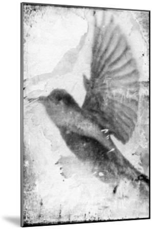 B&W Flight II-Ingrid Blixt-Mounted Art Print
