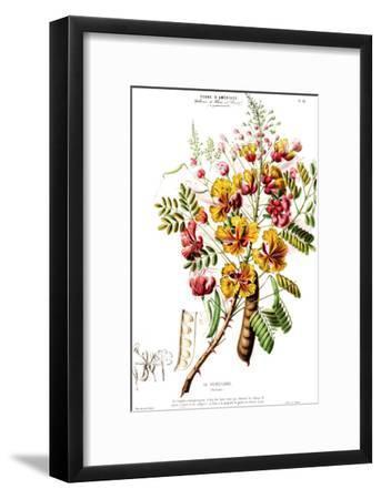Flored Amerique Lapoincillade- New York Botanical Garden-Framed Art Print