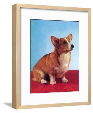 Alert Corgi-Found Image Press-Framed Art Print