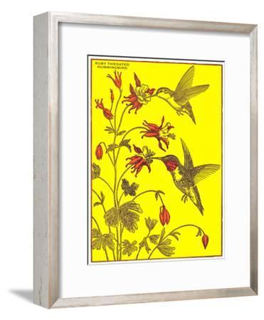 Ruby-Throated Hummingbirds-Found Image Press-Framed Art Print