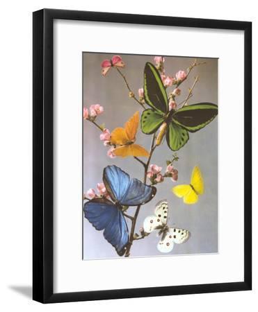 Butterflies On A Branch-Found Image Press-Framed Art Print