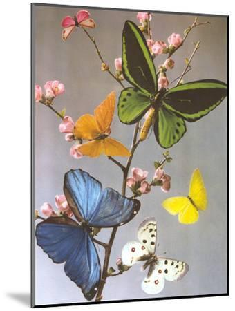 Butterflies On A Branch-Found Image Press-Mounted Art Print