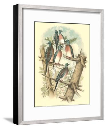 Pink-Breasted Doves-Found Image Press-Framed Art Print