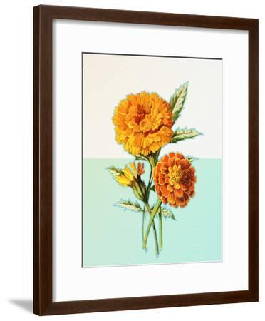 Marigold Yellow--Framed Art Print