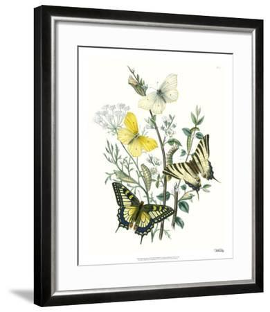 British Butterflies II-Unknown-Framed Giclee Print