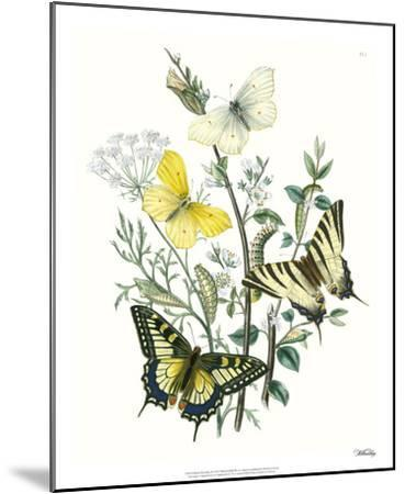 British Butterflies II-Unknown-Mounted Giclee Print