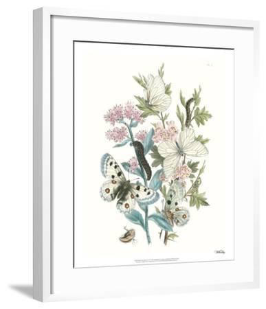 British Butterflies III-Unknown-Framed Giclee Print