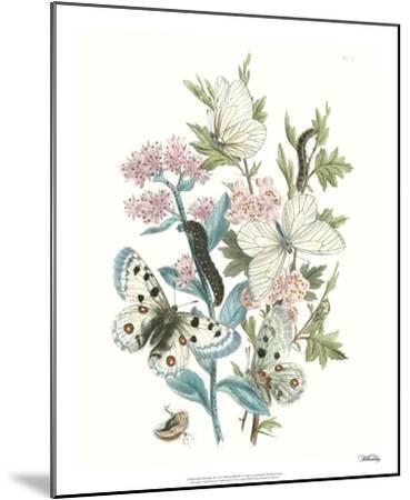 British Butterflies III-Unknown-Mounted Giclee Print