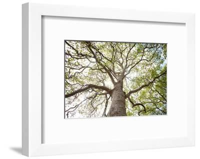 Enticing Oak-Michael Hudson-Framed Art Print