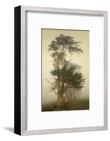 Cypress Symmetry-David Lorenz Winston-Framed Art Print