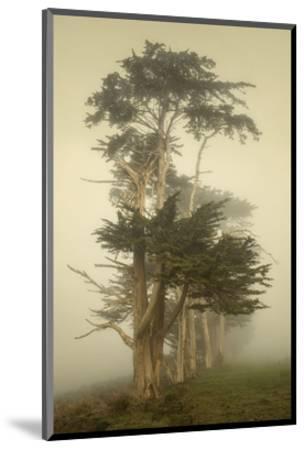 Cypress Symmetry-David Lorenz Winston-Mounted Art Print