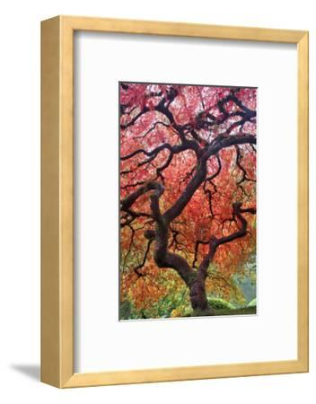 Autumn Patriarch-Dennis Frates-Framed Art Print