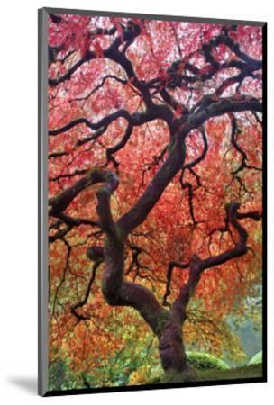 Autumn Patriarch-Dennis Frates-Mounted Art Print