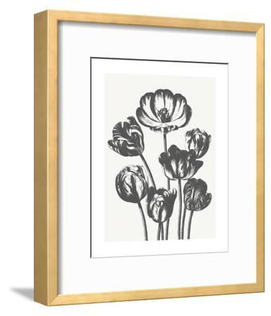 Tulips (Ivory & Ink)-Botanical Series-Framed Art Print
