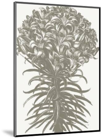 Lilies (Ivory & Burlap)-Botanical Series-Mounted Art Print