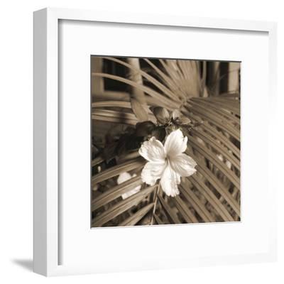 Frond Melody II-Tony Koukos-Framed Giclee Print