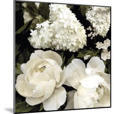 Ebony Blooms-Alan Lambert-Mounted Art Print