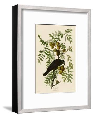 American Crow-John James Audubon-Framed Art Print