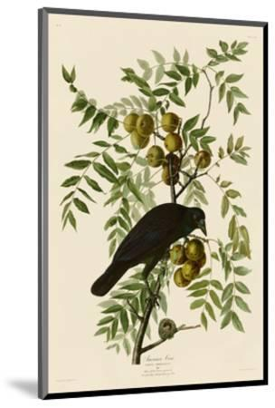 American Crow-John James Audubon-Mounted Art Print