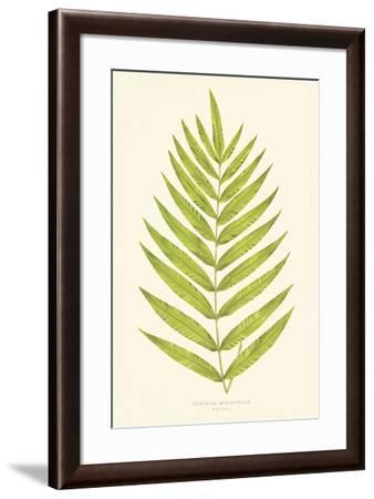 Polypodium Meniscifolium-Edward Joseph Lowe-Framed Giclee Print