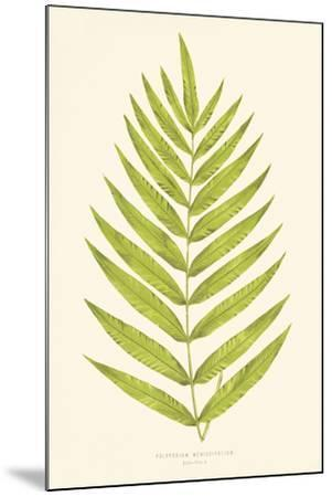Polypodium Meniscifolium-Edward Joseph Lowe-Mounted Giclee Print