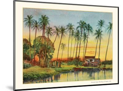Coconut Grove - Territory of Hawaii-Unknown-Mounted Art Print
