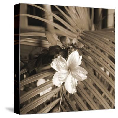 Frond Melody II-Tony Koukos-Stretched Canvas Print