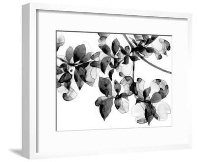Abloom - Noir-Jackie Battenfield-Framed Giclee Print