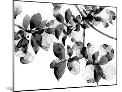 Abloom - Noir-Jackie Battenfield-Mounted Giclee Print