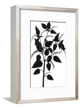Botanica Baccifer - Noir-The Vintage Collection-Framed Giclee Print