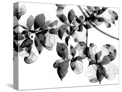 Abloom - Noir-Jackie Battenfield-Stretched Canvas Print