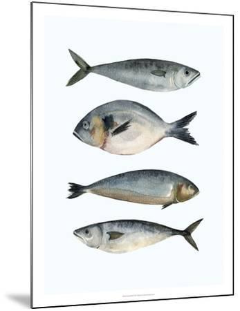 Four Fish II-Emma Scarvey-Mounted Giclee Print