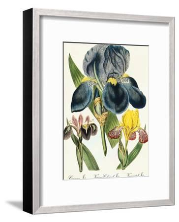 Iris-Coastal Print & Design-Framed Art Print