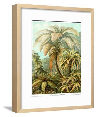 Haeckel Plate 92-Coastal Print & Design-Framed Art Print