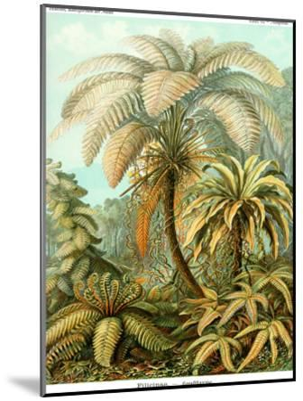 Haeckel Plate 92-Coastal Print & Design-Mounted Art Print