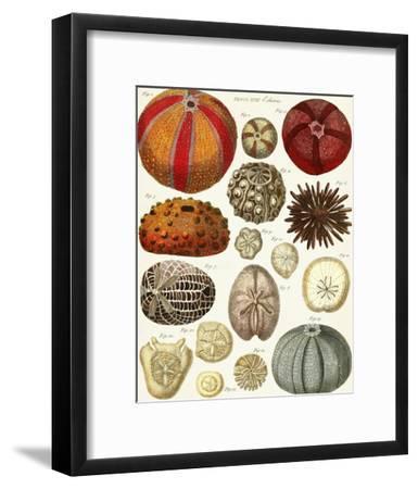 Sea Urchins-Coastal Print & Design-Framed Art Print