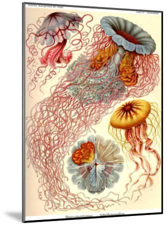 Haeckel Plate 8-Coastal Print & Design-Mounted Art Print