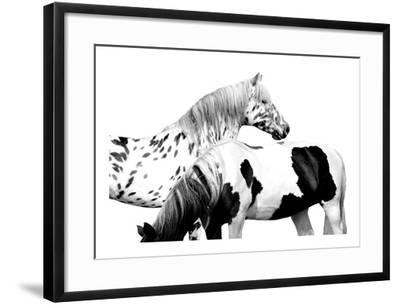 Spotted and Pinto-Samantha Carter-Framed Giclee Print