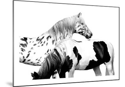 Spotted and Pinto-Samantha Carter-Mounted Giclee Print