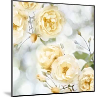 Yellow Rose Garden I-Joanna Lane-Mounted Giclee Print
