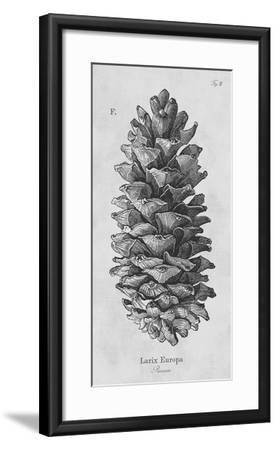 Larix Europa-Maria Mendez-Framed Giclee Print