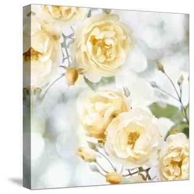 Yellow Rose Garden I-Joanna Lane-Stretched Canvas Print
