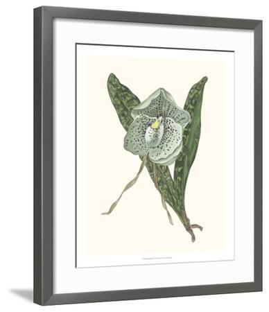 Orchid Display I-Melissa Wang-Framed Giclee Print
