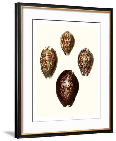 Conchologia Iconica I-Unknown-Framed Giclee Print