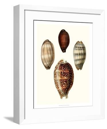 Conchologia Iconica III-Unknown-Framed Giclee Print